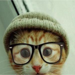 brainy cat