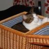 romeo_asleep_in_picnic_basket