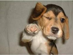 Dog-Winking