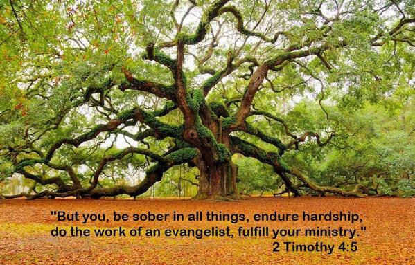 2 Timothy 4-5 - Oldest Tree
