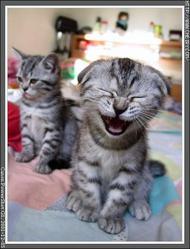 Cats_Laugh