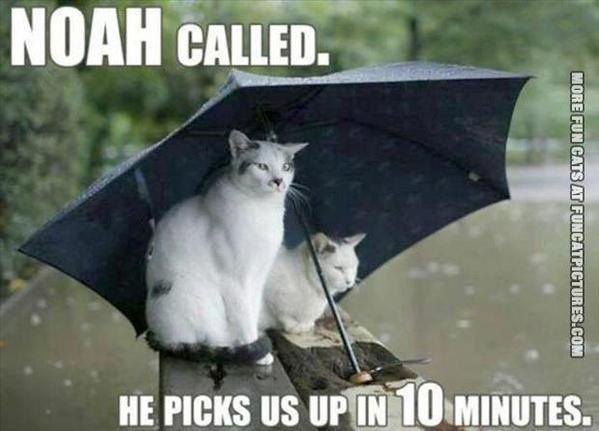 fun-cat-picture-noah-called
