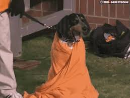 Image result for gif dejected tennessee fan